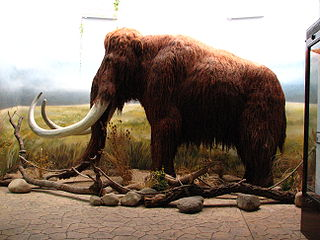 Mammoth - lateral view
