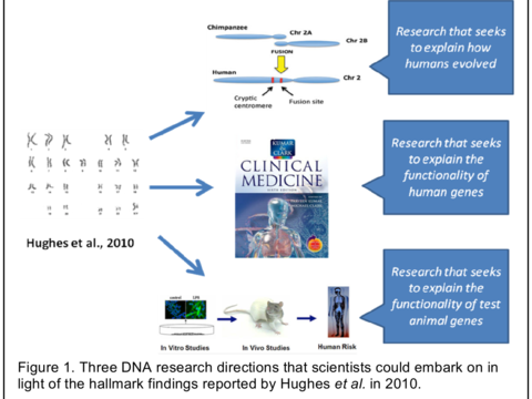 Figure 1. Three DNA research directions that scientists could embark on in light of the hallmark findings reported by Hughes et al. in 2010.